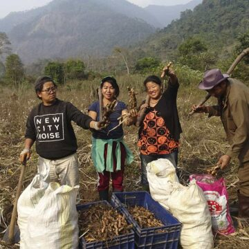 Kurkuma und Ingwer aus Bhutan #2